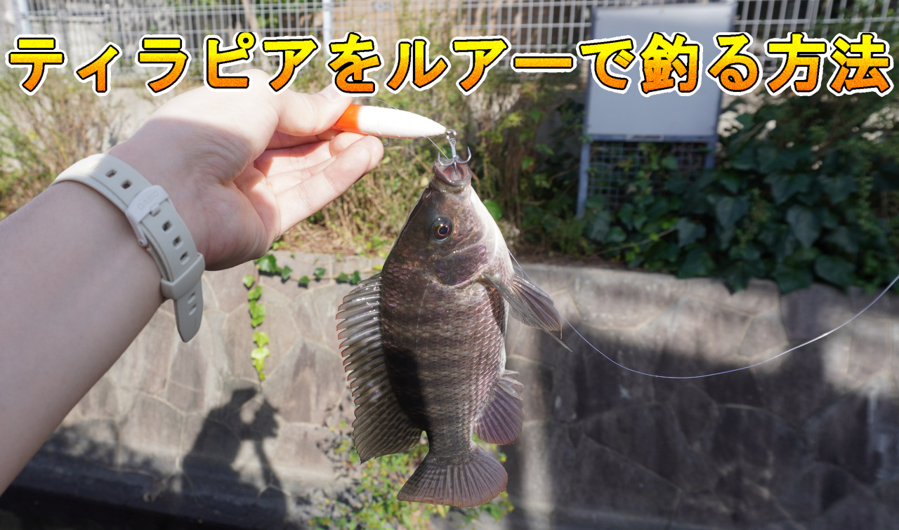 ティラピアをルアーで釣る方法