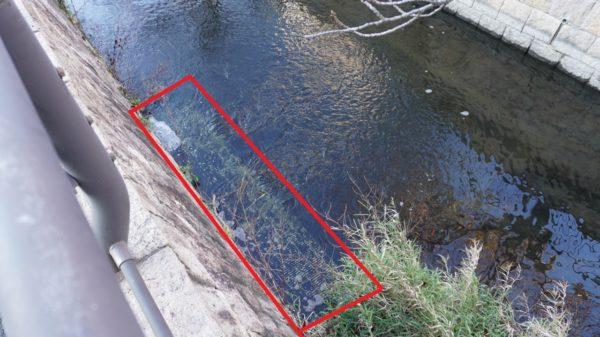 荒子川の浄化水