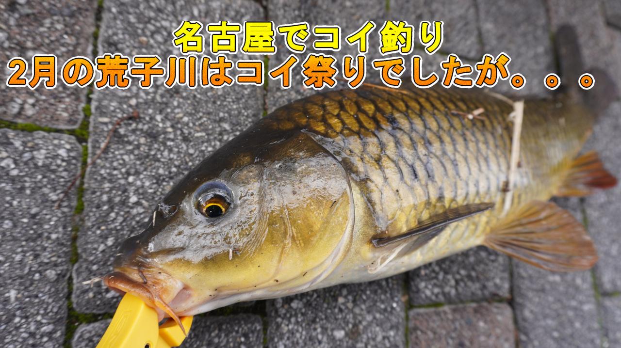 名古屋の鯉釣り