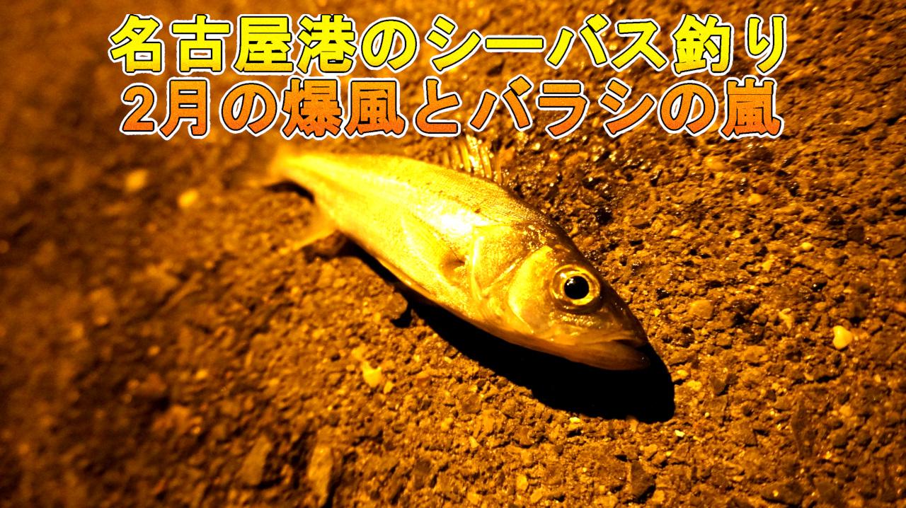 名古屋のシーバス釣り