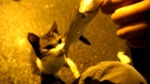 シーバス釣りでネコ
