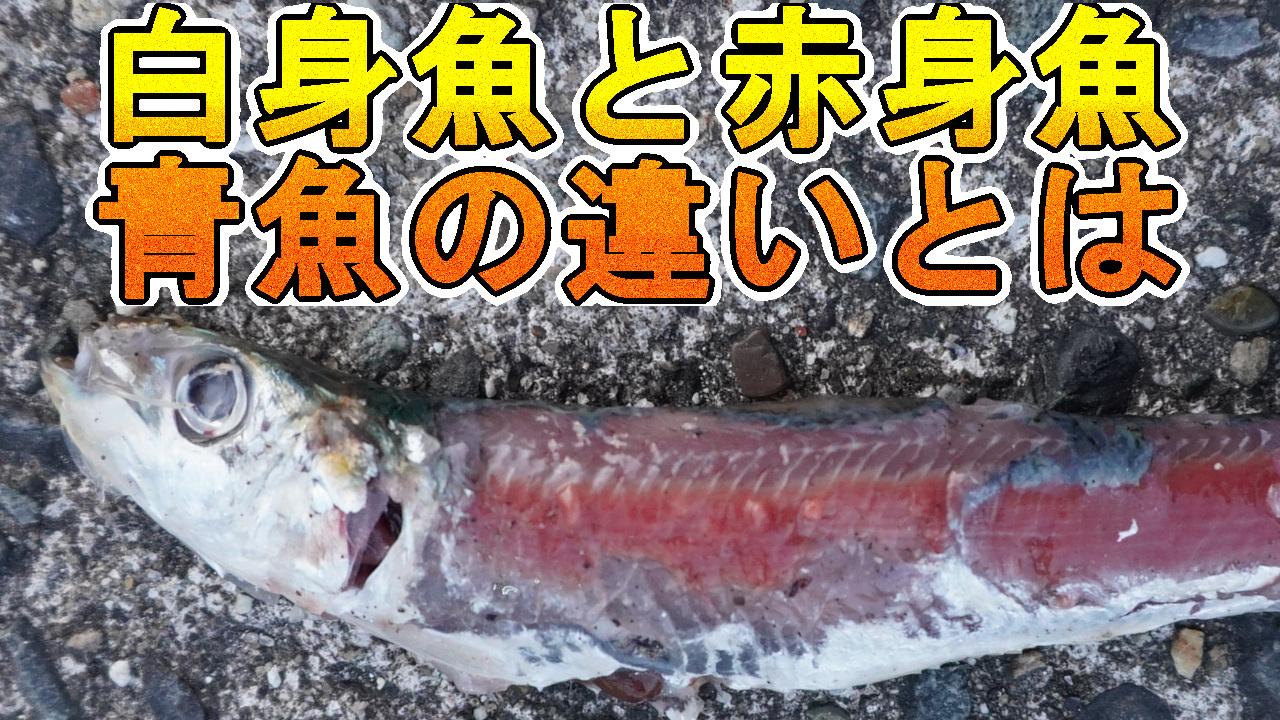 白身魚と赤身魚、青魚
