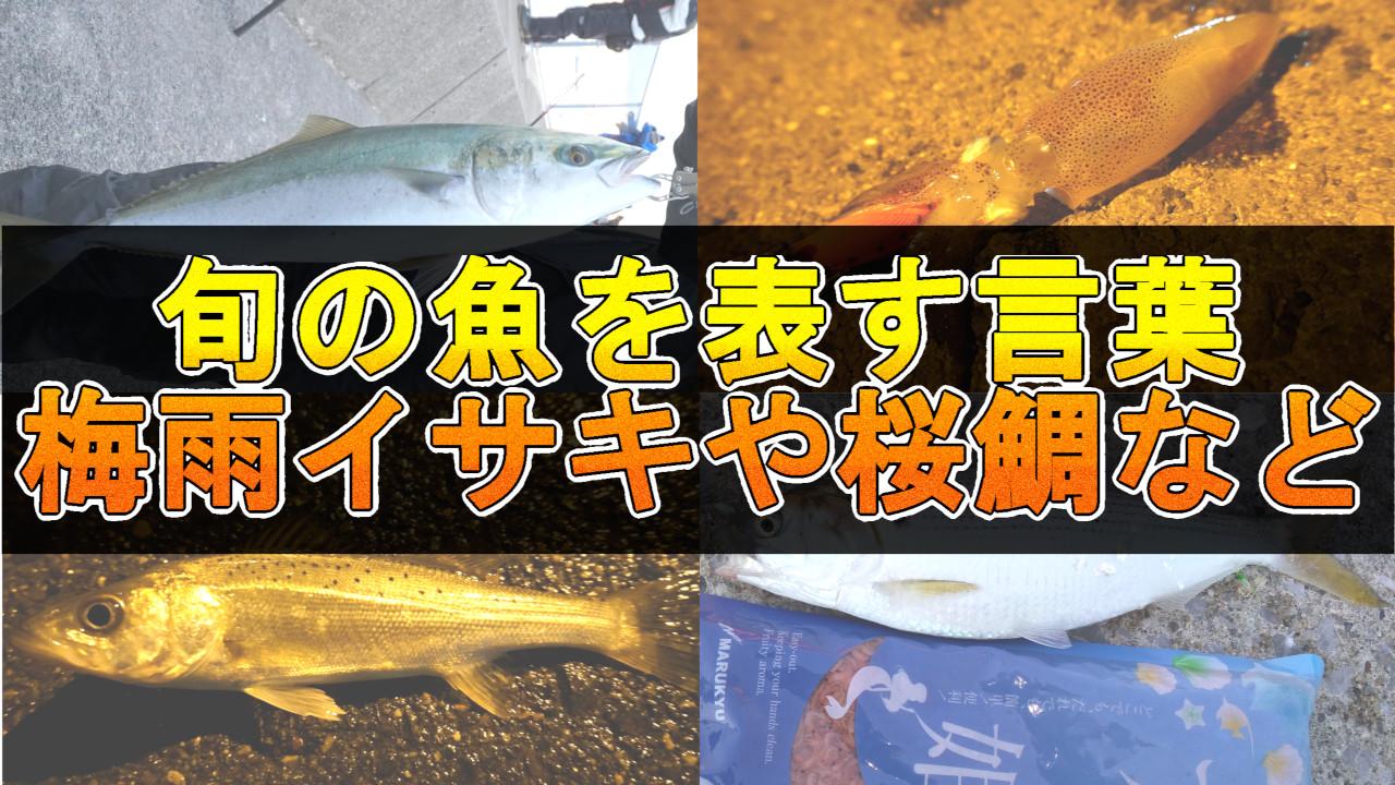 旬の魚を表す日本の言葉