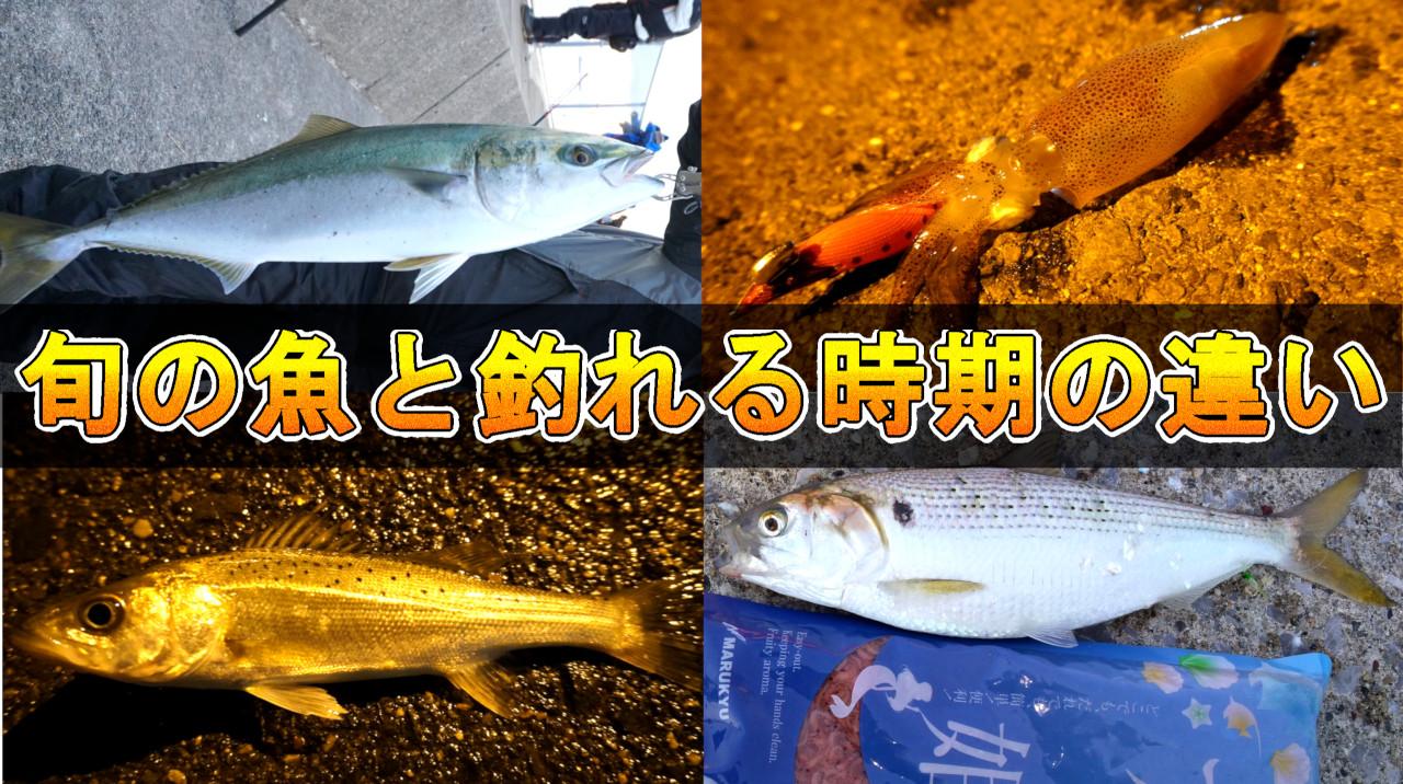 旬の魚と釣れる時期