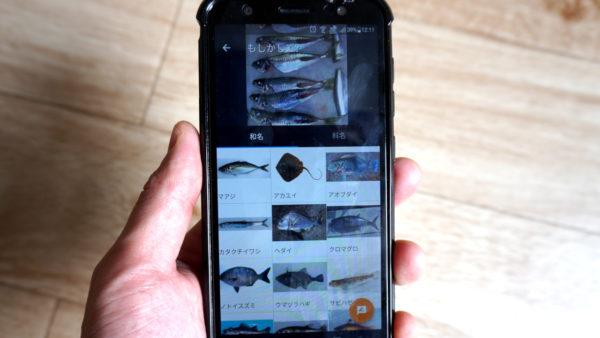 魚みっけアプリ