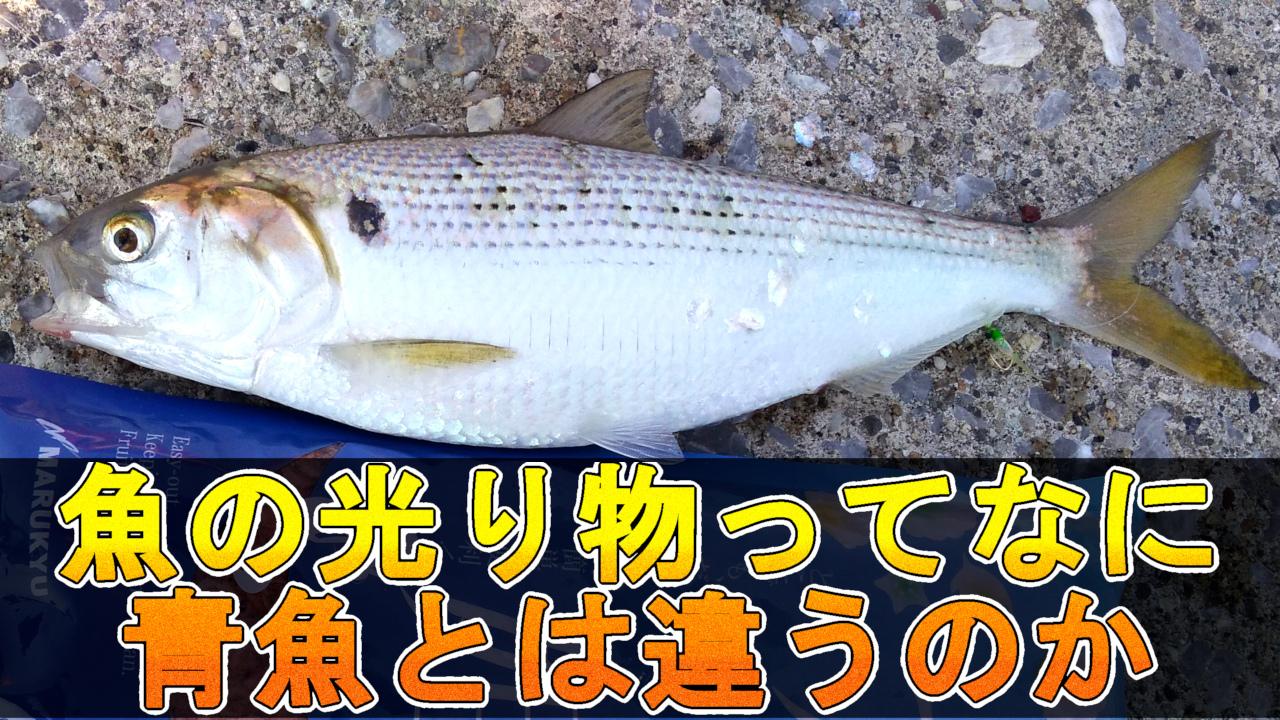 魚の光り物