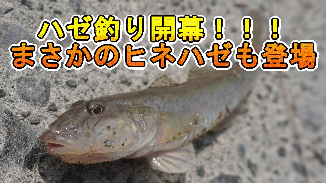 木曽川のハゼ釣り