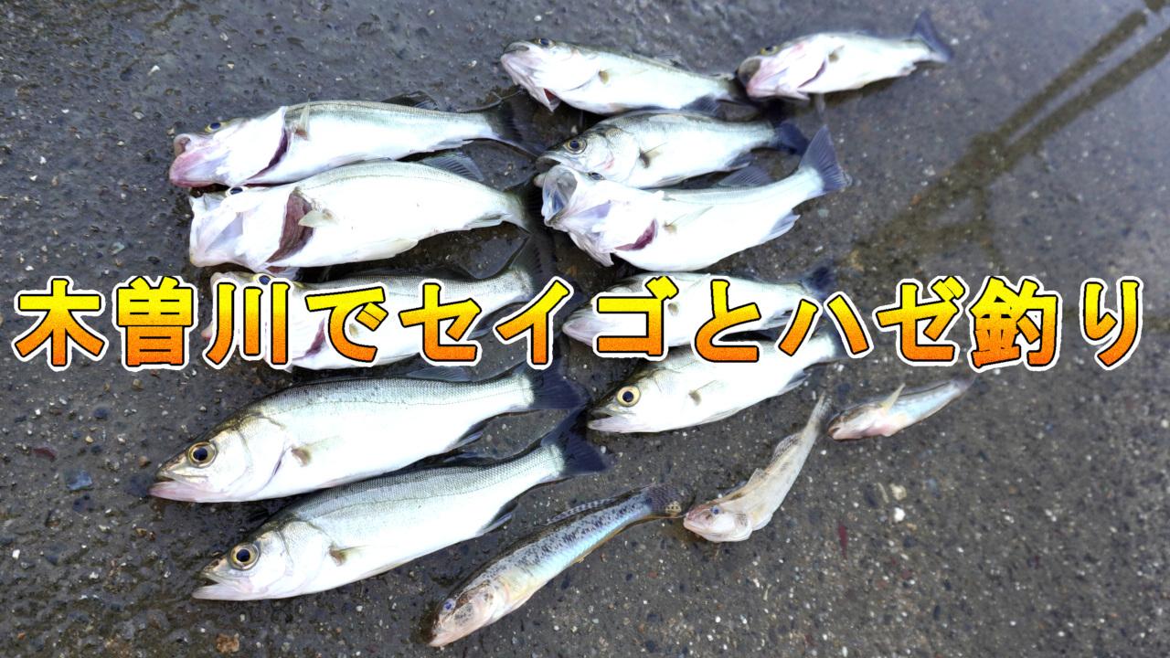 木曽川で釣り