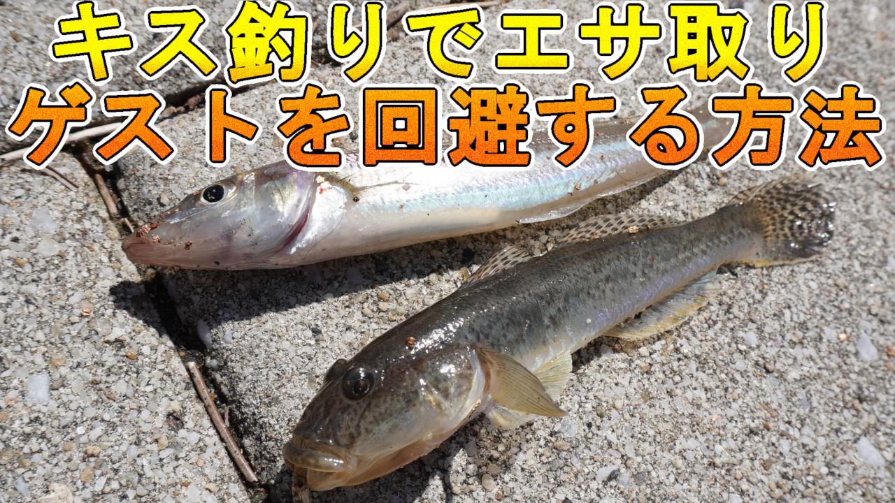 キス釣りでエサ取りを回避する方法