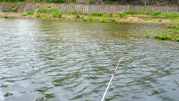 琵琶湖芹川